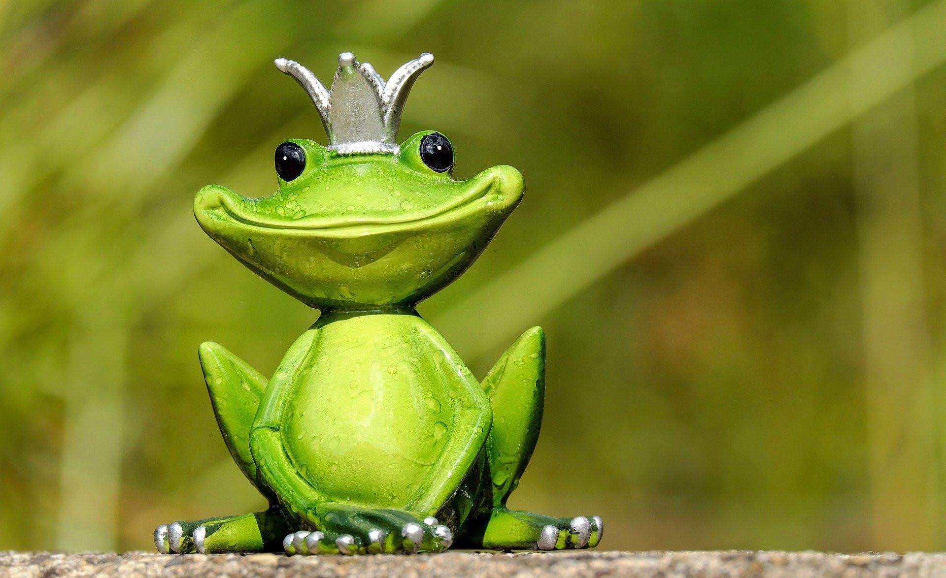 frog-2240764_1920