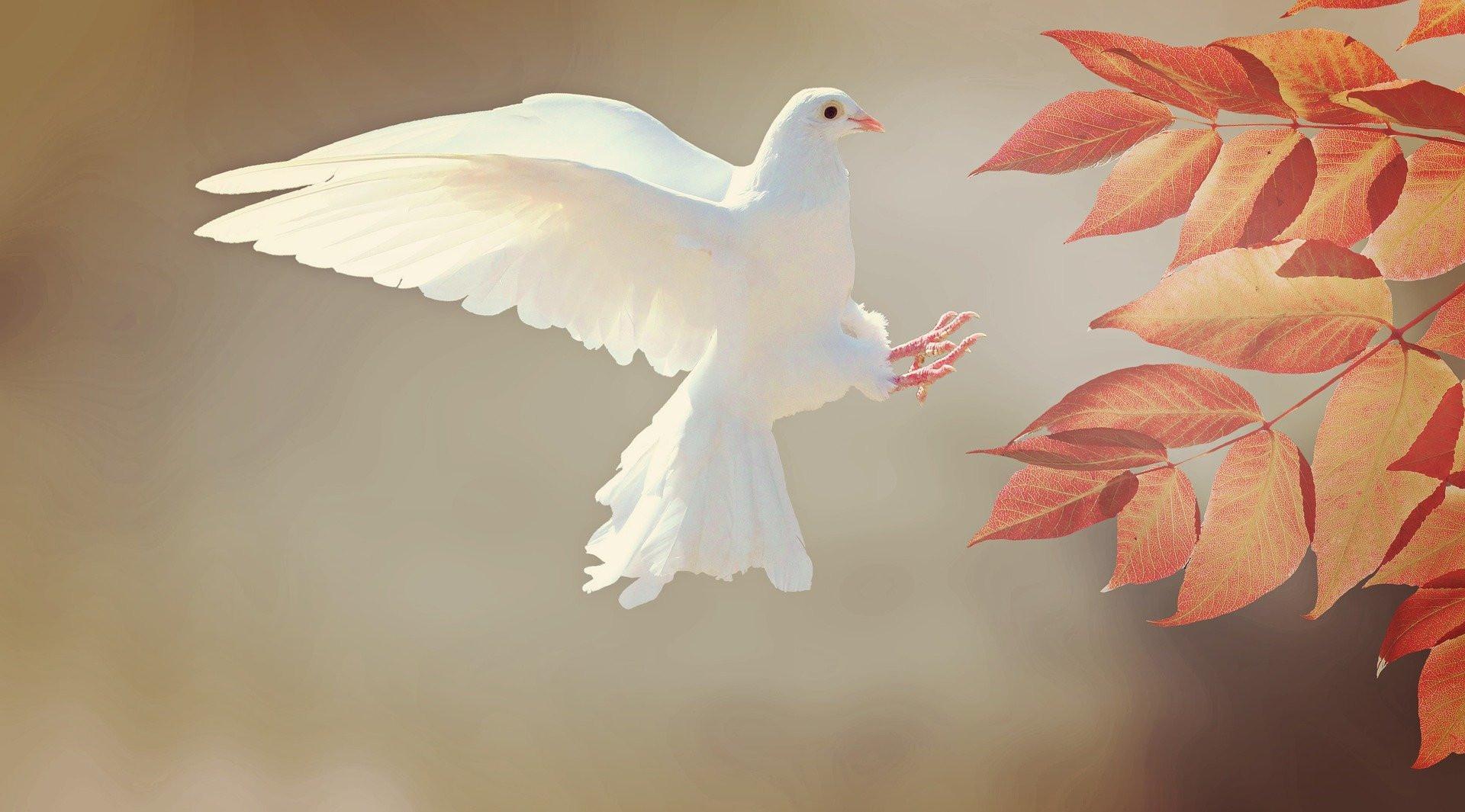 dove-2516641_1920